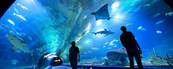 Oceanografic valencia precio entradas horarios tus Entradas aquarium valencia